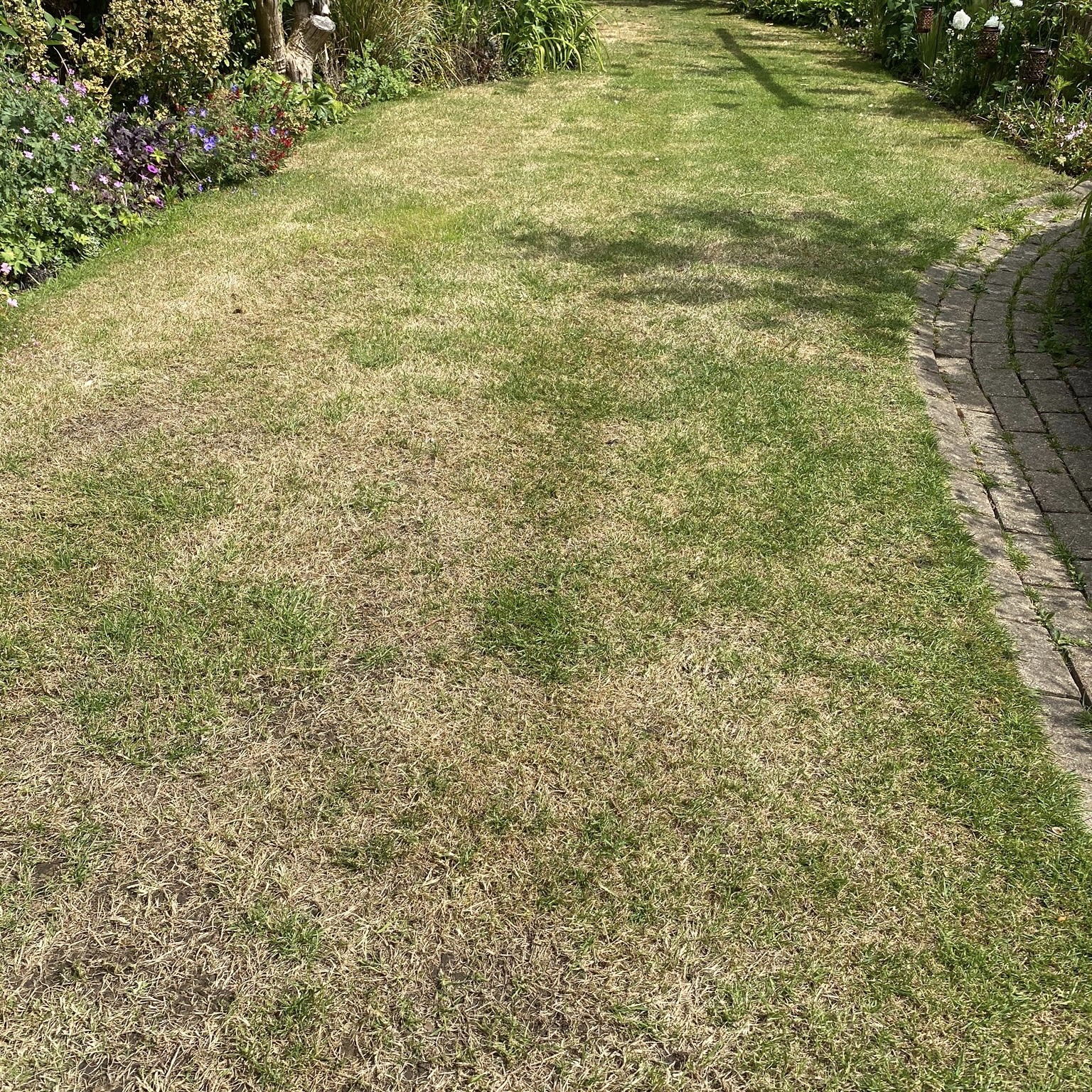 Brown patchy untreated lawn before lawn treatment