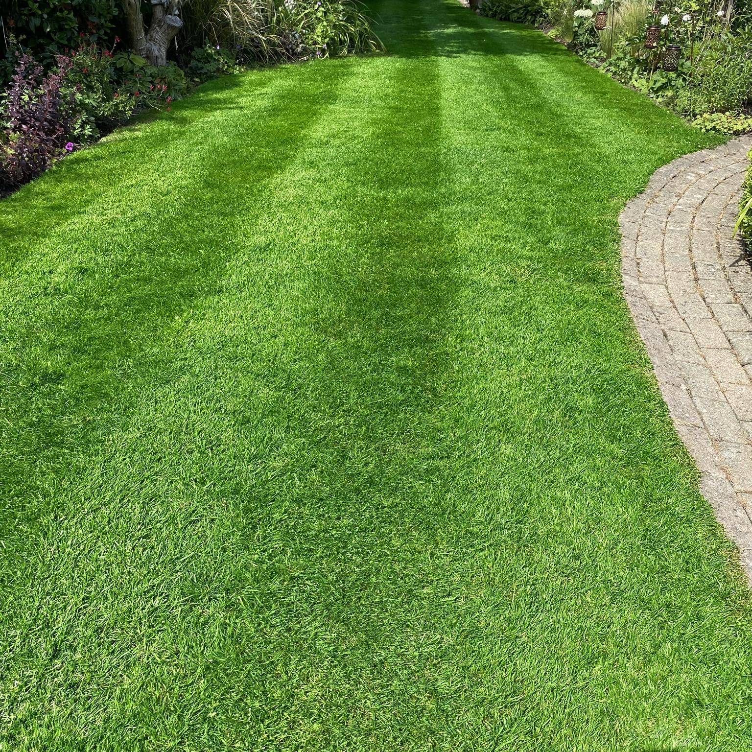 lush green lawn after lawn fertiliser treatment