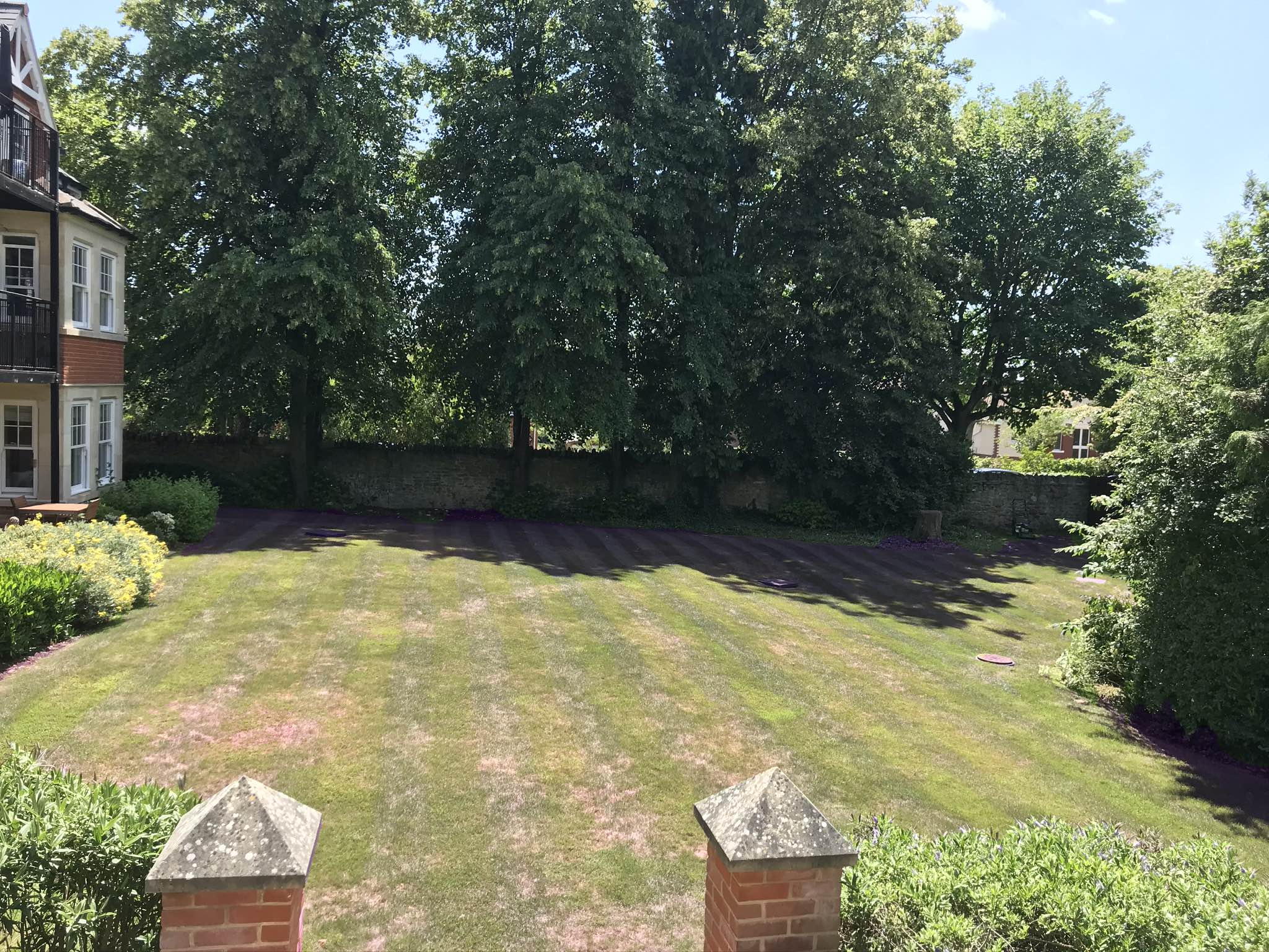 Westlecot House poor health lawn before fertiliser treatment by Johnson Lawn Care